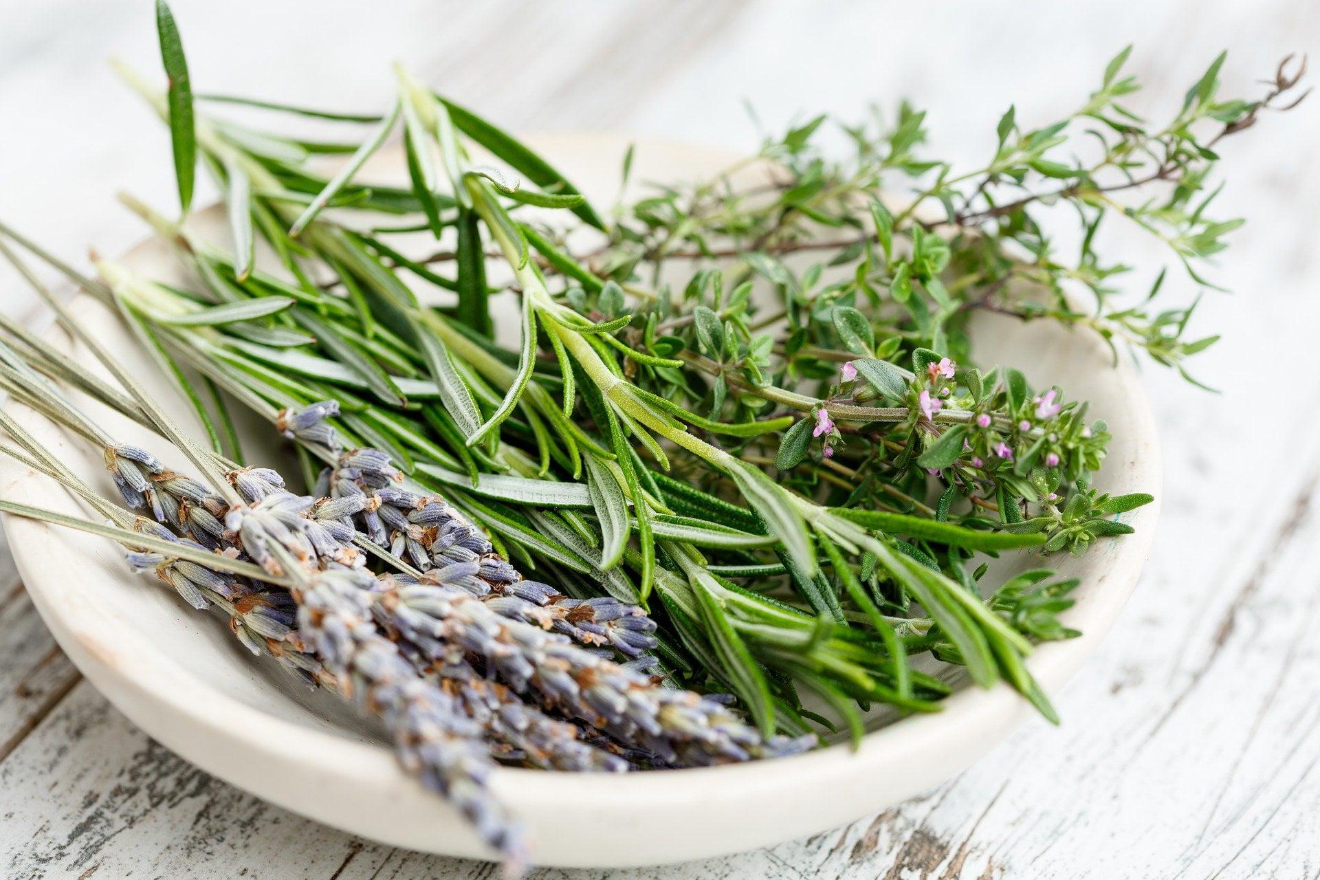 Bylica estragon – właściwości   lecznicze