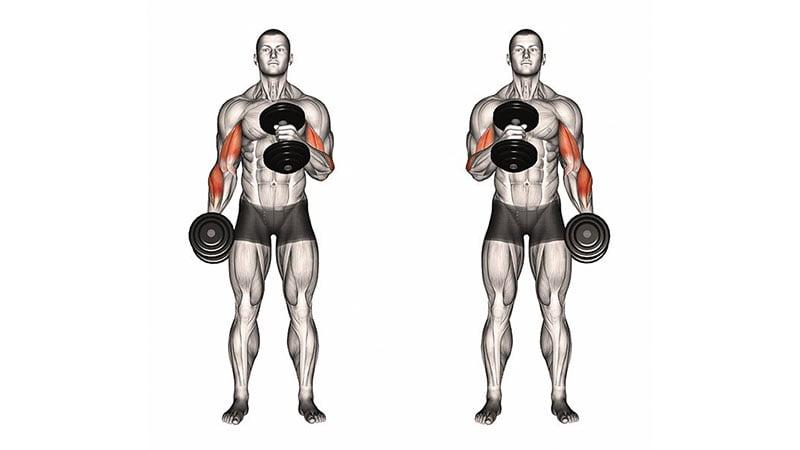 Jakie ćwiczenia domowe  na biceps? Porady i wskazówki